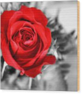 Red Rose Wood Print by Karen M Scovill
