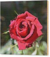 Red Rose Landscape Wood Print