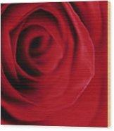 Red Rose Macro  Wood Print