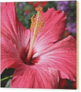 Red Rose Of Sharon  Wood Print