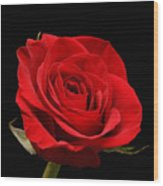 Red Rose On Black 1 Wood Print