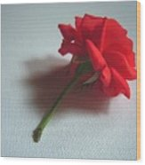 Red Rose Plucked Wood Print
