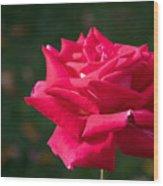 Red Rose Profile Wood Print