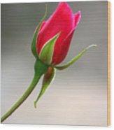 Red Rose Simplicity Wood Print