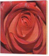 Red Rose Up Close Wood Print