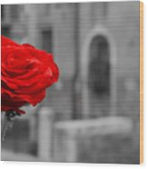 Red Rose with Black and White Background Wood Print