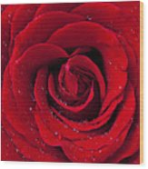 Red Rose With Dew Wood Print by Garry Gay