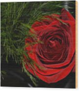 Red Rose With Garnish And Black Velvet Wood Print