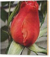 Red Rosebud  Wood Print