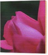 Red Rosebud Raindrops Wood Print
