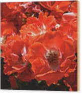Red Roses Botanical Landscape 1 Red Rose Giclee Prints Baslee Troutman Wood Print