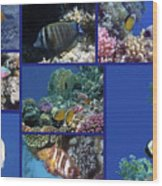 Red Sea Collage Wood Print