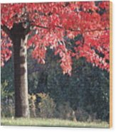 Red Shade Tree Wood Print