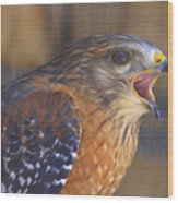 Red Shoulder Hawk Wood Print