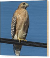Red-shoulder Hawk Wood Print