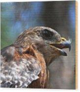 Red Shouldered Hawk - Profile Wood Print