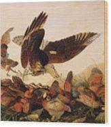 Red Shouldered Hawk Attacking Bobwhite Partridge Wood Print