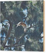 Red Shouldered Hawk Flying Away 1 Wood Print