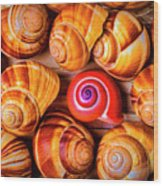 Red Snail Shell Wood Print
