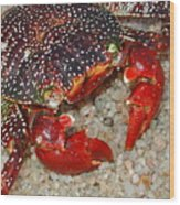 Red Spotted Crab Wood Print