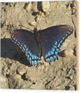 Red Spotted Purple Astyanax Wood Print