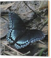 Red Spotted Purple Swallowtail Butterfly Wood Print