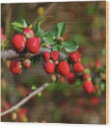 Red Spring Buds Wood Print