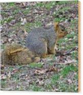 Fox Squirrel 2 Wood Print