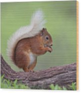 Red Squirrel Curved Log Wood Print