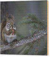 Red Squirrel Having Lunch Wood Print