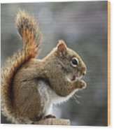 Red Squirrel On Wooden Fence II Wood Print