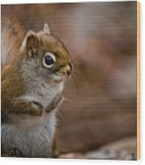 Red Squirrel Pictures 170 Wood Print