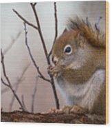 Red Squirrel - Sciurus Vulgaris Wood Print