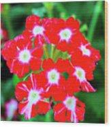 Red Star Flower Wood Print