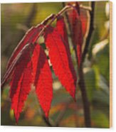 Red Sumac Leaves Wood Print