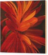 Red Sunflower 1 Wood Print