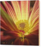 Red Sunflower 3 Wood Print