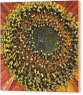 Red Sunflower Macro Wood Print
