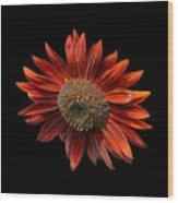 Red Sunflower On Black Wood Print