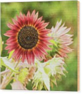 Red Sunflower, Provence, France Wood Print