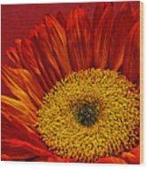 Red Sunflower Viii Wood Print