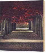 Red Surreal Path  Wood Print