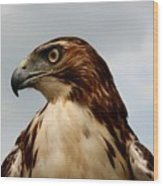 Red Tail Hawk 1 Wood Print