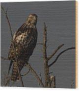 Red-tail Hawk 2 Wood Print