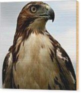 Red Tail Hawk 2 Wood Print