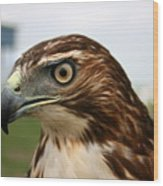 Red Tail Hawk 3 Wood Print
