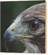 Red Tail Hawk Misted Wood Print