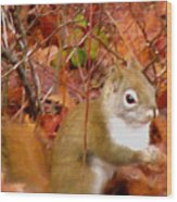 Red Tail Squirrel  Wood Print