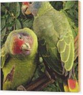 Red-tailed Amazon Amazona Brasiliensis Wood Print