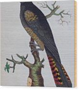 Red-tailed Black Cockatoo 1790 Wood Print